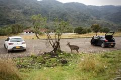 Chingaza - natura selvaggia