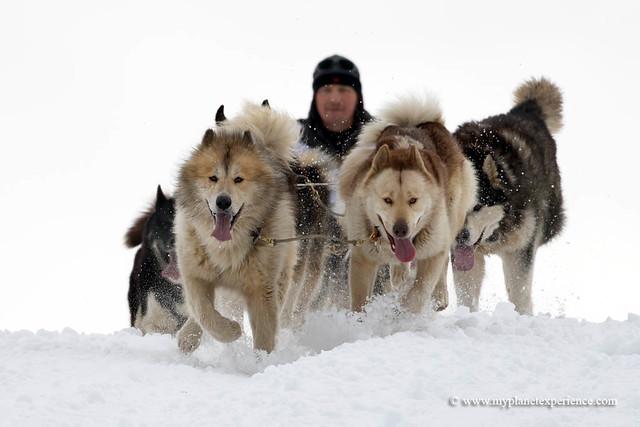 Sled dog race