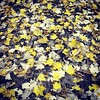 yellow #leaves #fall #autumn #automne #feuilles... by ~Amandine~