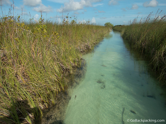 The scenery reminded me of the Okavango Delta in Botswana