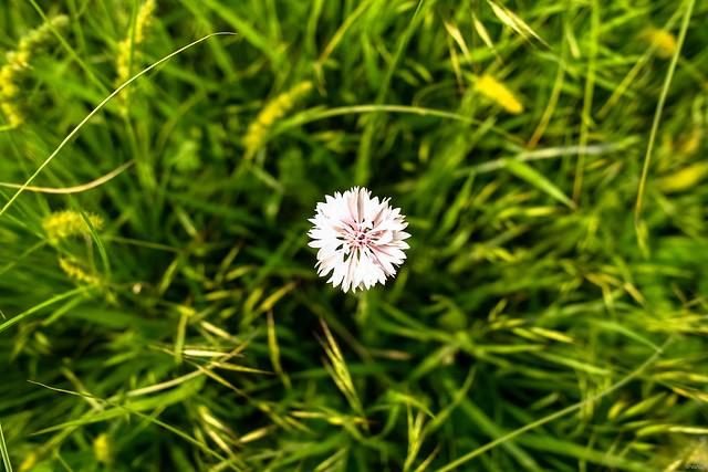 Nameless Flower