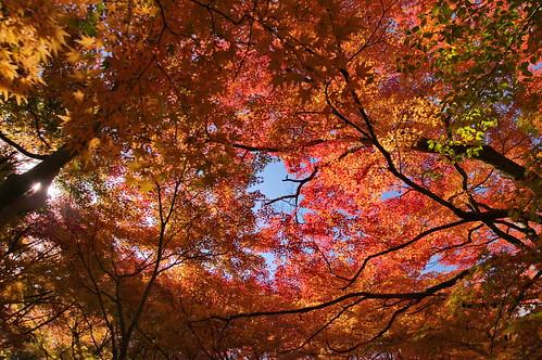 【写真】紅葉 : 真如堂