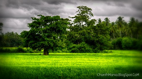 Sri Lanka Village by CharithMania