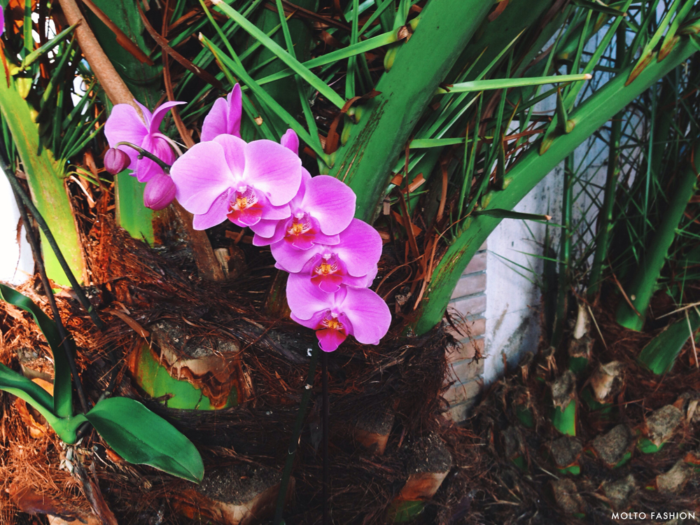 Orchidea Horizontal_s_r