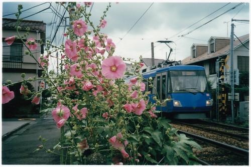 お花と世田谷線(初夏)