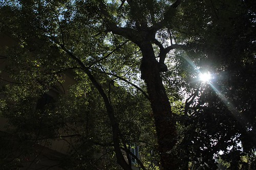 Orto botanico: tra le foglie, il sole