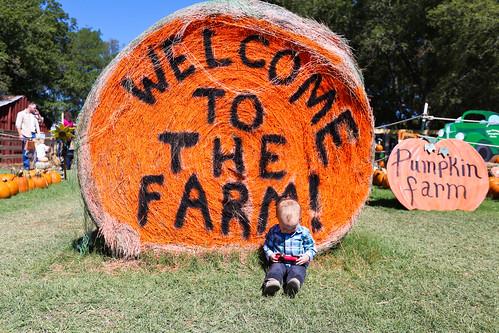 Big Orange Pumpkin Farm-5.jpg