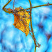 Small photo of Leaf Vine & thorns