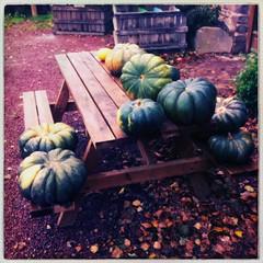 Ferme d'Orgères #fall #farming - Photo of Brie