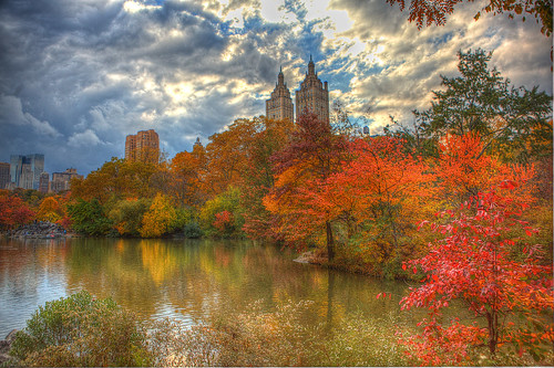 NYC fall foliage in Central Park
