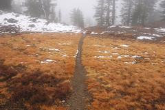 path through the grass near uppder deadfall lakes, California