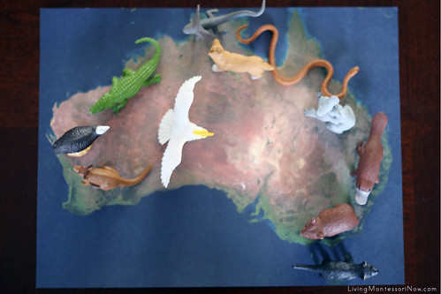 Animals on Satellite Map of Australia