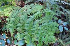 Ferns thrive in moisture area
