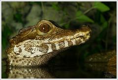 Reptiles&Amphibians