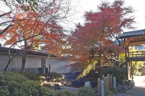 【写真】2013 紅葉 : 妙顕寺/2020-11-01/IMGP4149