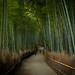 the path of bamboo, revisited #28 (near Tenryuu-ji temple, Kyoto) by Marser