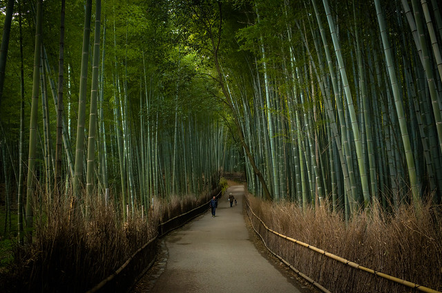 the path of bamboo, revisited #28 (near Tenryuu-ji temple, Kyoto)