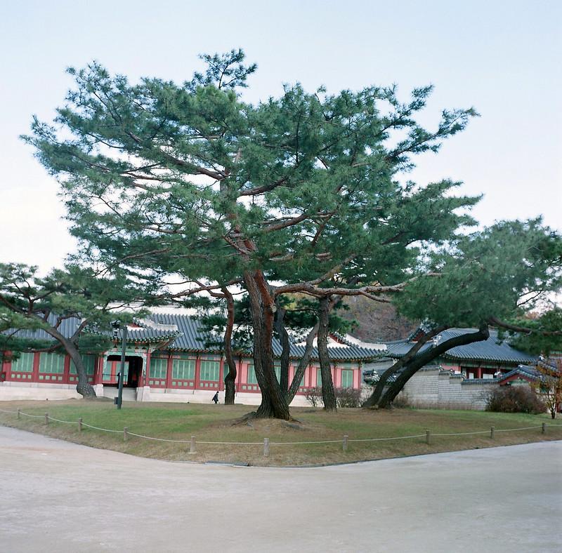 【Bronica S2】-首爾昌德宮2