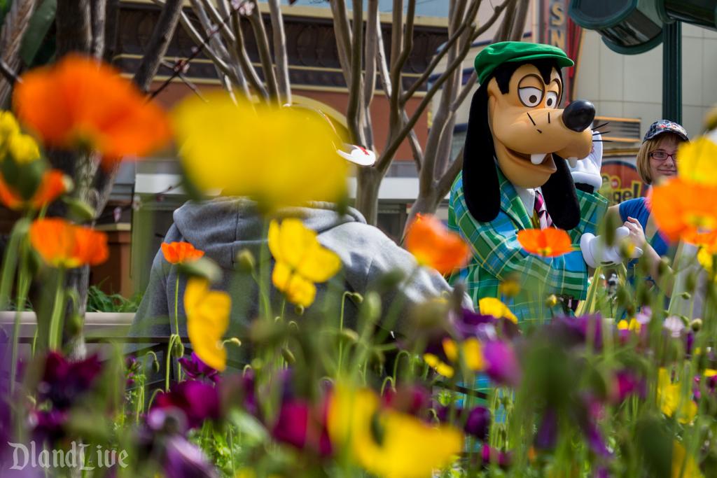 Spring Flowers on Buena Vista Street - Goofy