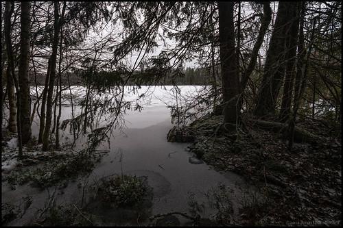 winter lake snow ice is moss vinter overcast twigs snö hdr mossa sjö mulet träsk 7ex pirilö gubbträsket kvistar