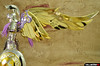 [Imagens] Saint Cloth Myth - Athena Kamui 13289427623_a2ebe61488_t