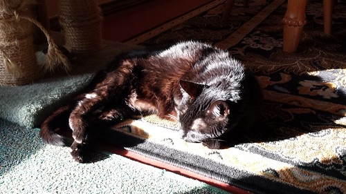 Merlin in a sunbeam.