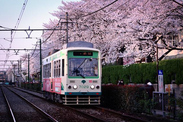 Sakura Arakawa - 7000
