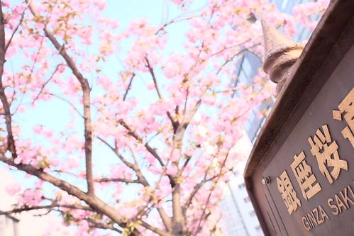 Ginza Sakura street 02