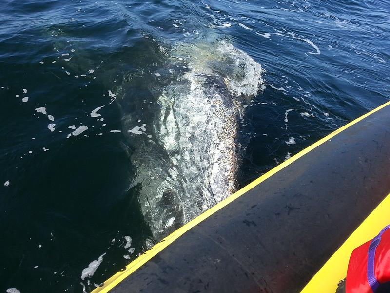 Whale Watching Adventure Tofino, British Columbia