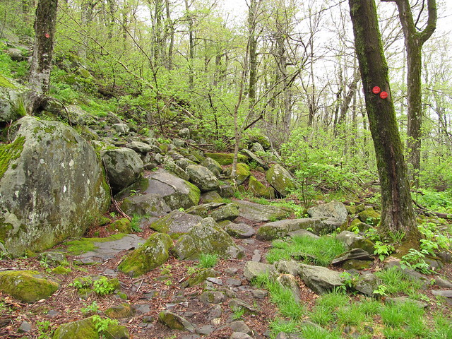 Devil's Path from Pecoy Notch