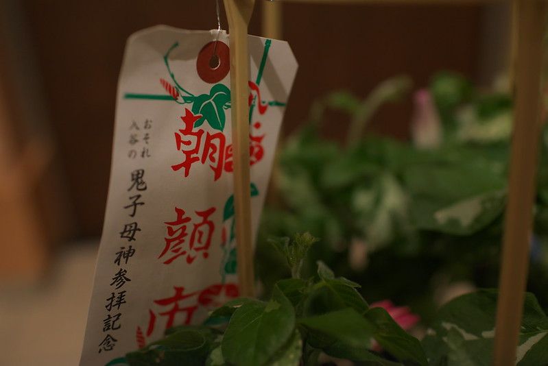 入谷朝顔まつりでアサガオを買ってみた 2015年7月8日