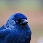 A Bird in Bushy Park
