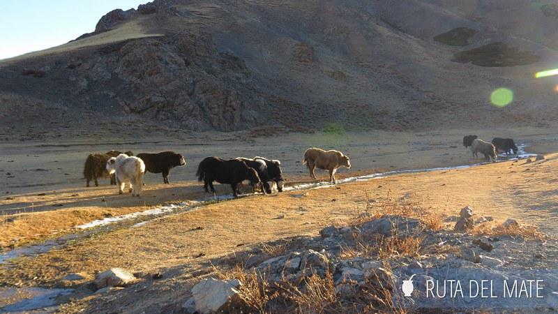 Desierto Gobi Mongolia Dia3 (3)