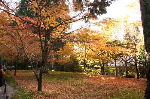 【写真】紅葉 : 三千院