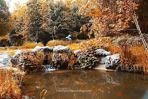 paris forest river landscape rocks rivière boisdevincennes paysages forêt bois rochers espacesverts parksandgardens parcsetjardins natureetpaysages adivers