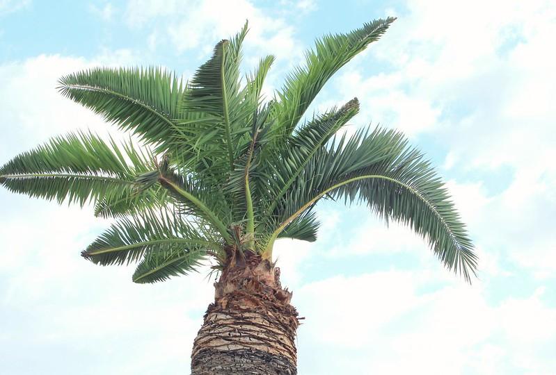 palmuuu