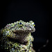 Frog_02 by yayad