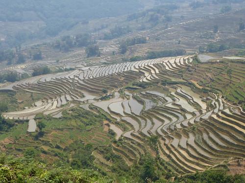 Yunnan13-Yuanyang 16-Qingkou (10)