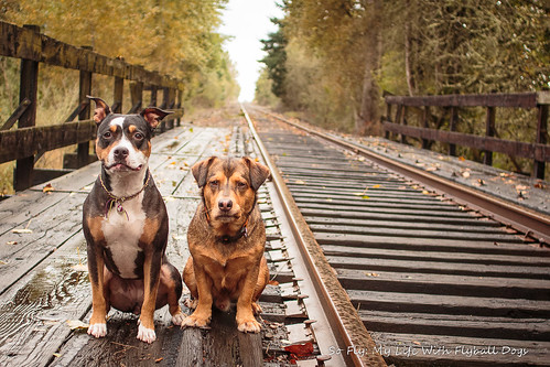 Train Tracks-9522