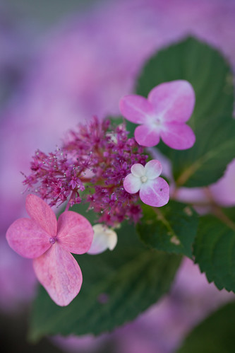 Pink in Nature~ by conniee4 aka Connie Etter