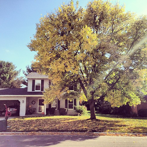 Another tree in my life. This has doubled in size since we have lived here (@ten years) It's glowing today. See Katie?