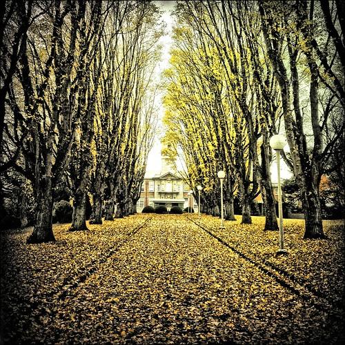 autumn hdr lansdowne camosun camosuncollege libatique73lens robustafilm