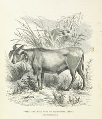 """British Library digitised image from page 240 of """"Explorations and adventures in Equatorial Africa; with accounts of the manners and customs of the people and of the chace of the gorilla, crocodile, leopard, elephant, hippopotamus and other animals. (Seco"""