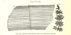 """British Library digitised image from page 288 of """"Manual of Geology: treating of the principles of the science with special reference to American geological history ... Revised edition"""""""