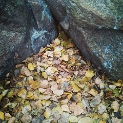 #Autumn #Leaves