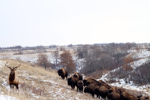 Silverwing Ranch, North Dakota