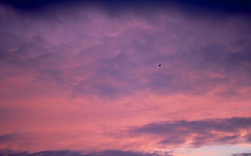 A Bird in the Morning Sky