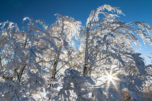 schnee winter sky snow tree nature sunrise canon landscape eos schweiz switzerland suisse swiss natur himmel 7d landschaft sonnenaufgang baum solothurn baselland passwang watn canoneos7d baselcountry watndatn solothurncountry swissmidland