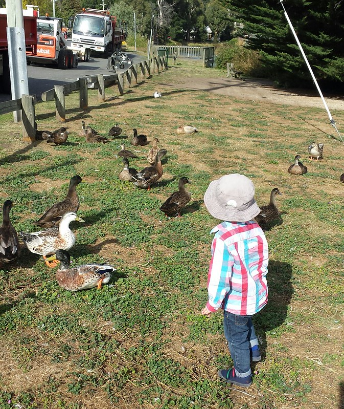 At the duck park - bonus diggers!