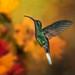 Emerald..!! by Alfredo11